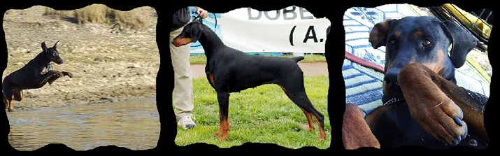 Redshift Dobermanns